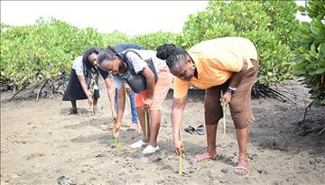 Mangrove Planting Day